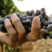 Nero d'Avola; dé Siciliaanse druif