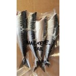 Mackerel Tails Frozen Bait