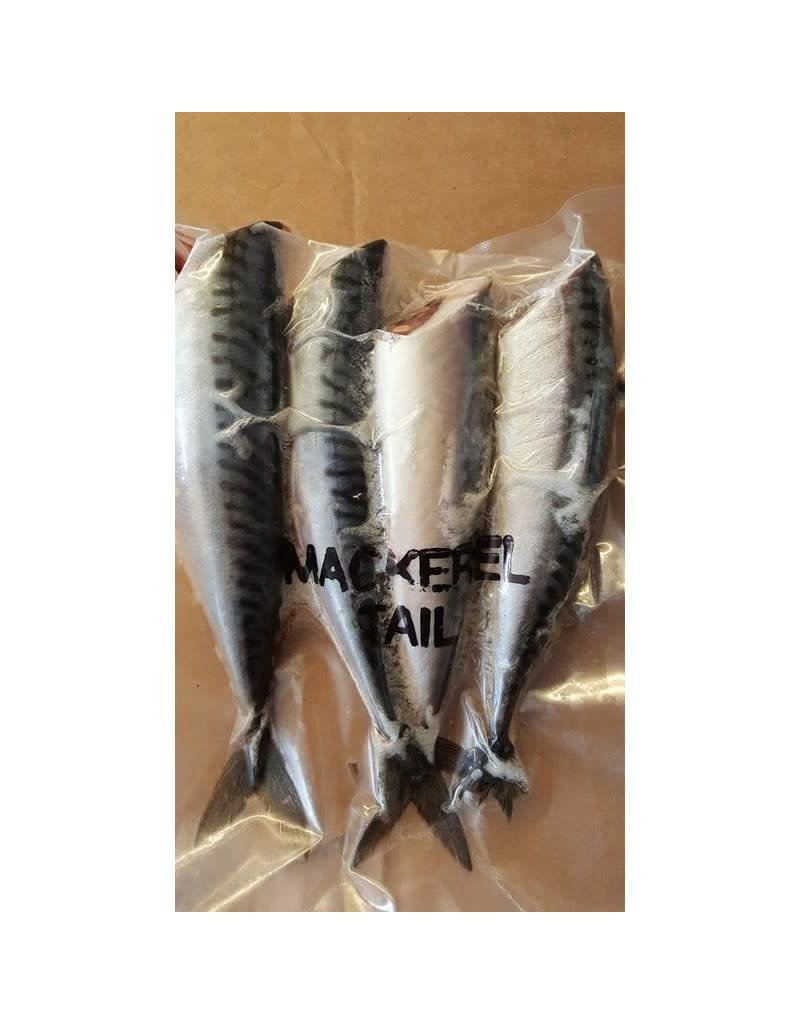 Mackerel Tails Frozen Bait