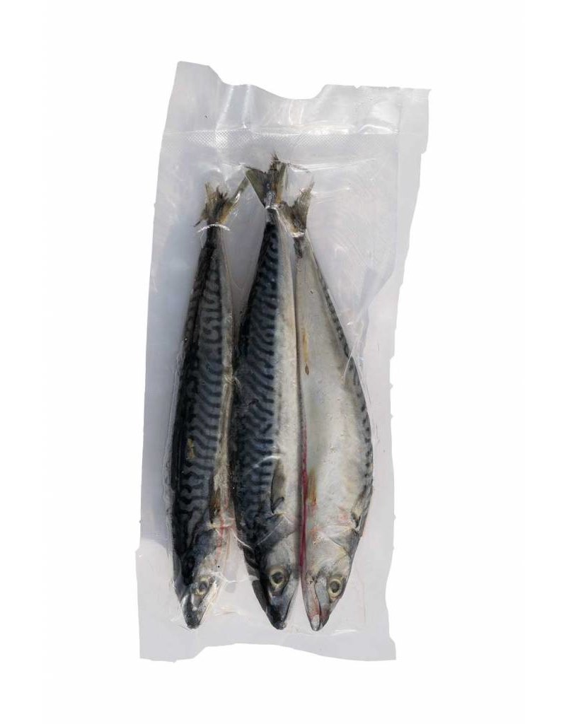 Mackerel Joeys Frozen Bait