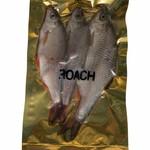Roach Frozen Bait