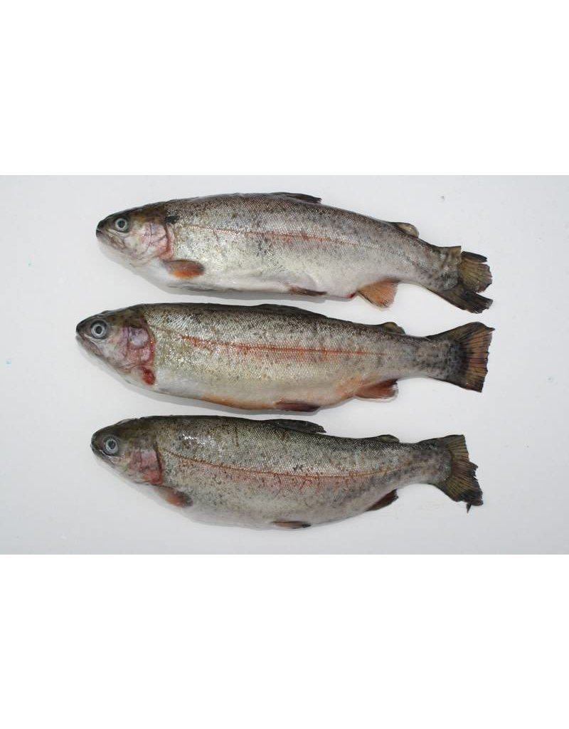 Rainbow Trout Frozen Bait