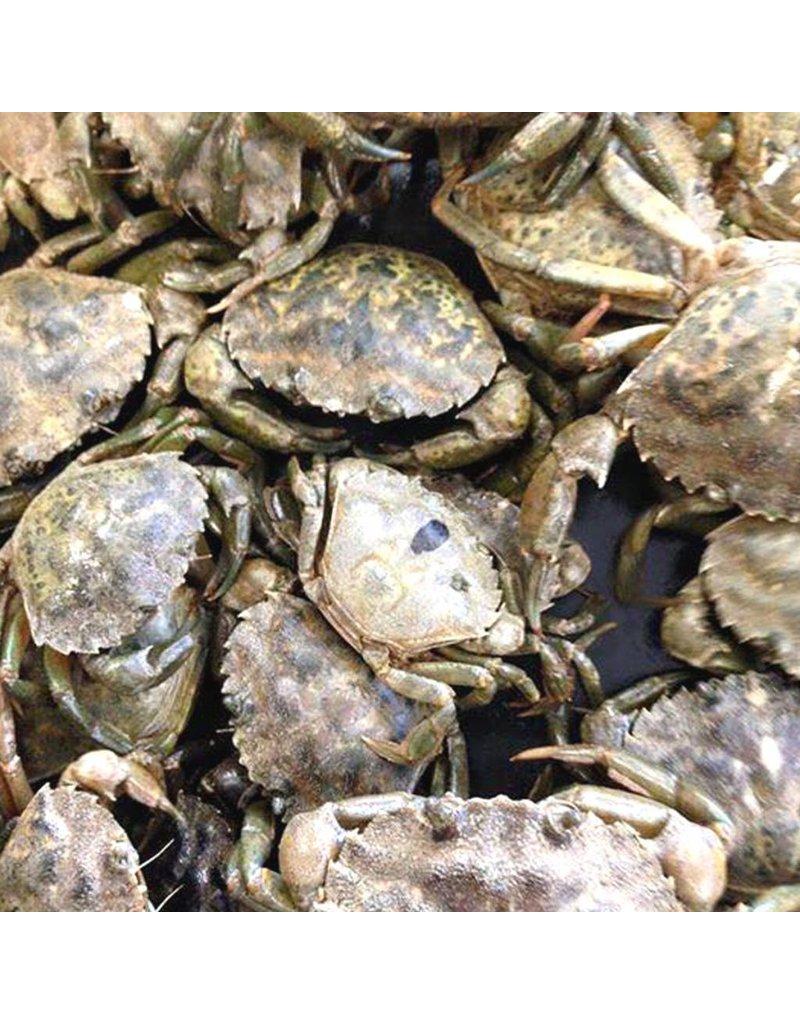 Peeler Crab Sea Bait