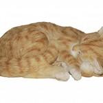 Vivid Arts VIVID ARTS RL SLEEPING CAT GINGER B