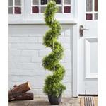 Smart Garden Smart Garden Cypress Topiary Twirl 120 cm