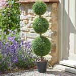 Smart Garden Smart Garden Trio Topiary Tree 80 cm