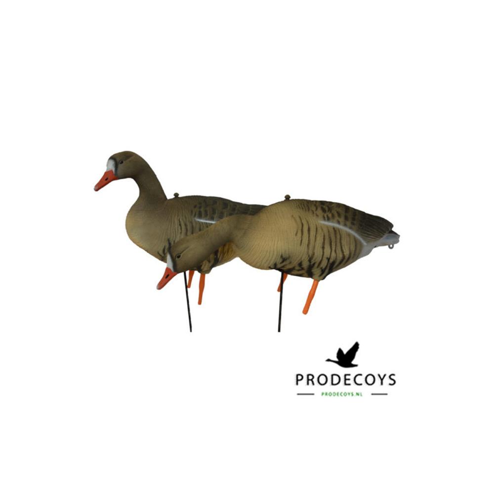 Prodecoys Kolgans Lokkers-1