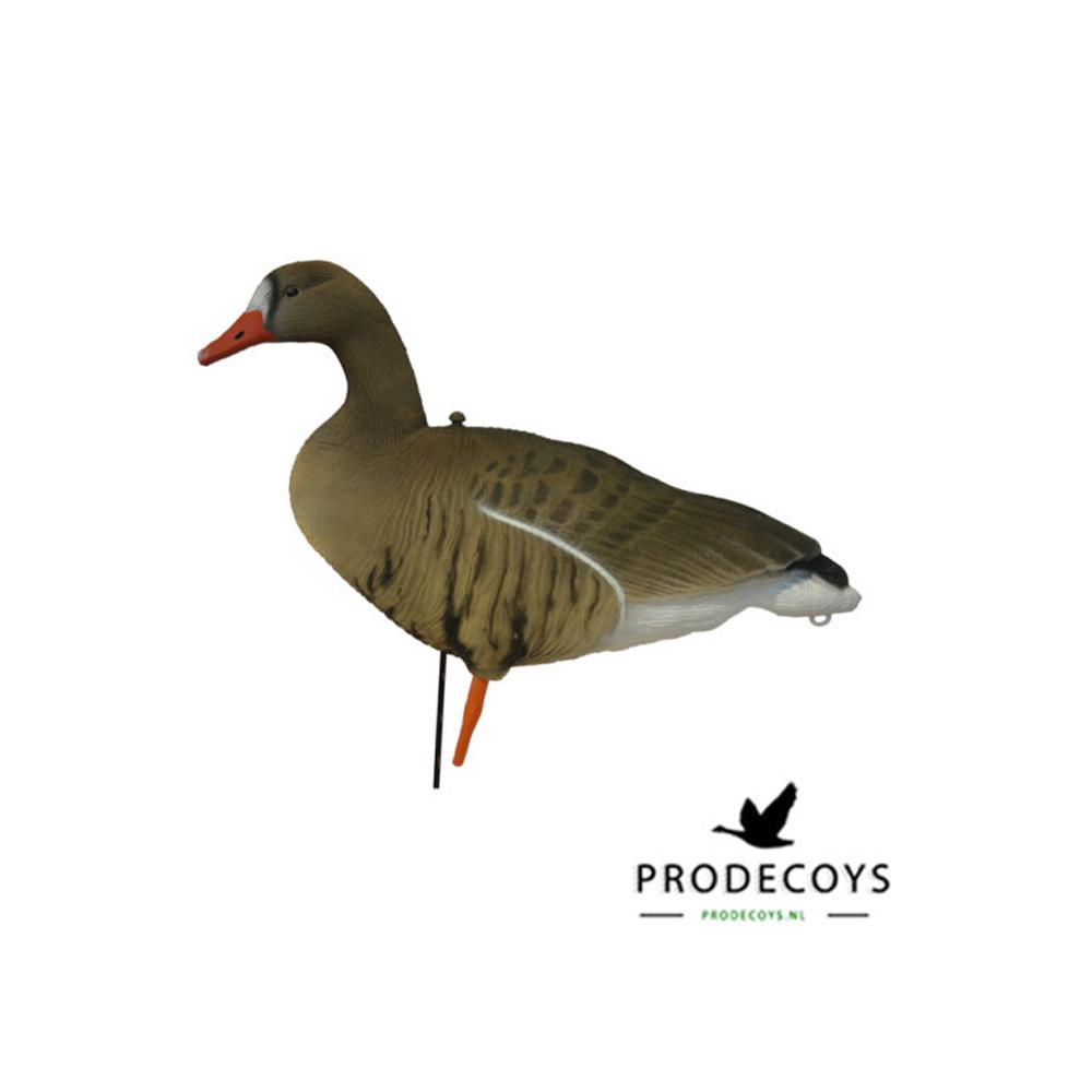 Prodecoys Kolgans Lokkers-2