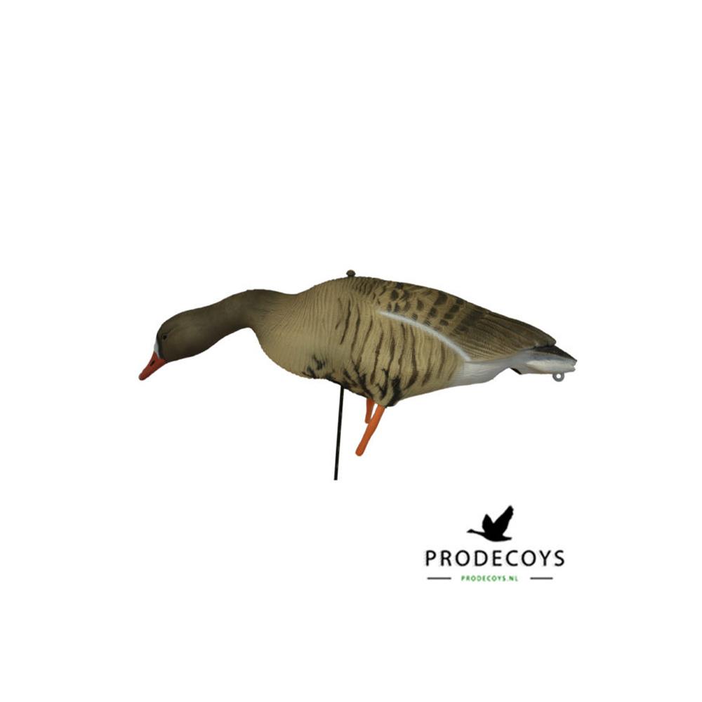Prodecoys Kolgans Lokkers-3