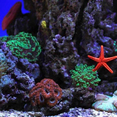 6bf863bbb8e Zoutwater aquarium LED - HVP Aqua