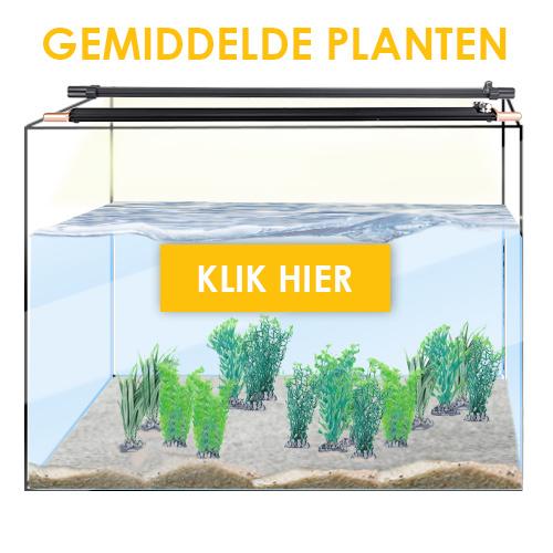 Zoetwater gemiddelde planten