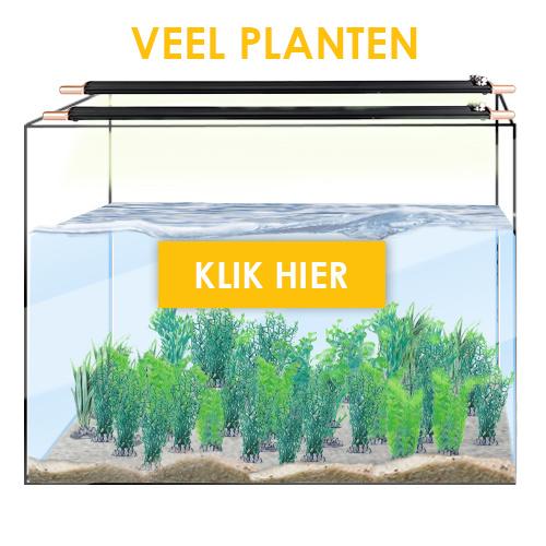 Veel planten zoet