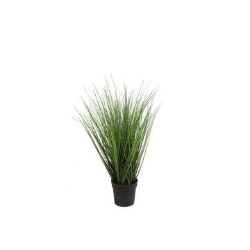 Countryfield Countryfield Plant Poaceae Medium Groen