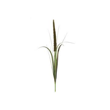 Countryfield 780931 Alopecurus Groen