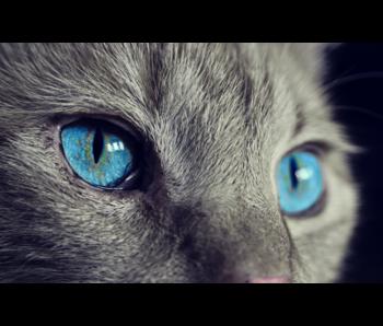 RoughMark Sticker blauwe kattenogen