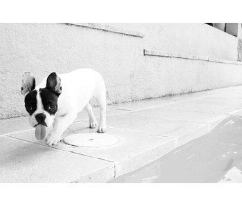 RoughMark Sticker hond met tong