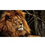 RoughMark Sticker leeuw