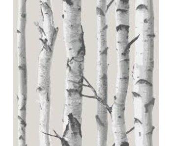 Fotobehang Peel & Stick Berkenbos