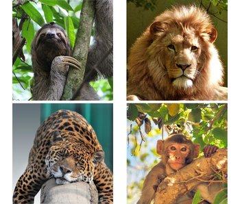 Sticker leeuw, aap, luiaard of jaguar kast expedit / kallax ikea