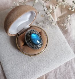 Ring abalone