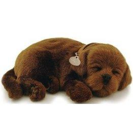 Perfect Petzzz Perfect Petzzz Hond Labrador Bruin