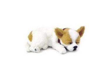 Knuffel Chihuahua