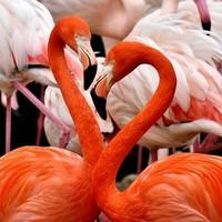 Tropische sferen met flamingo versiering