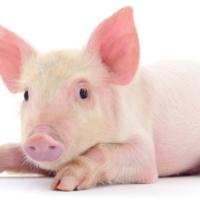 Een leuk Peppa Pig feestje voor jouw peuter