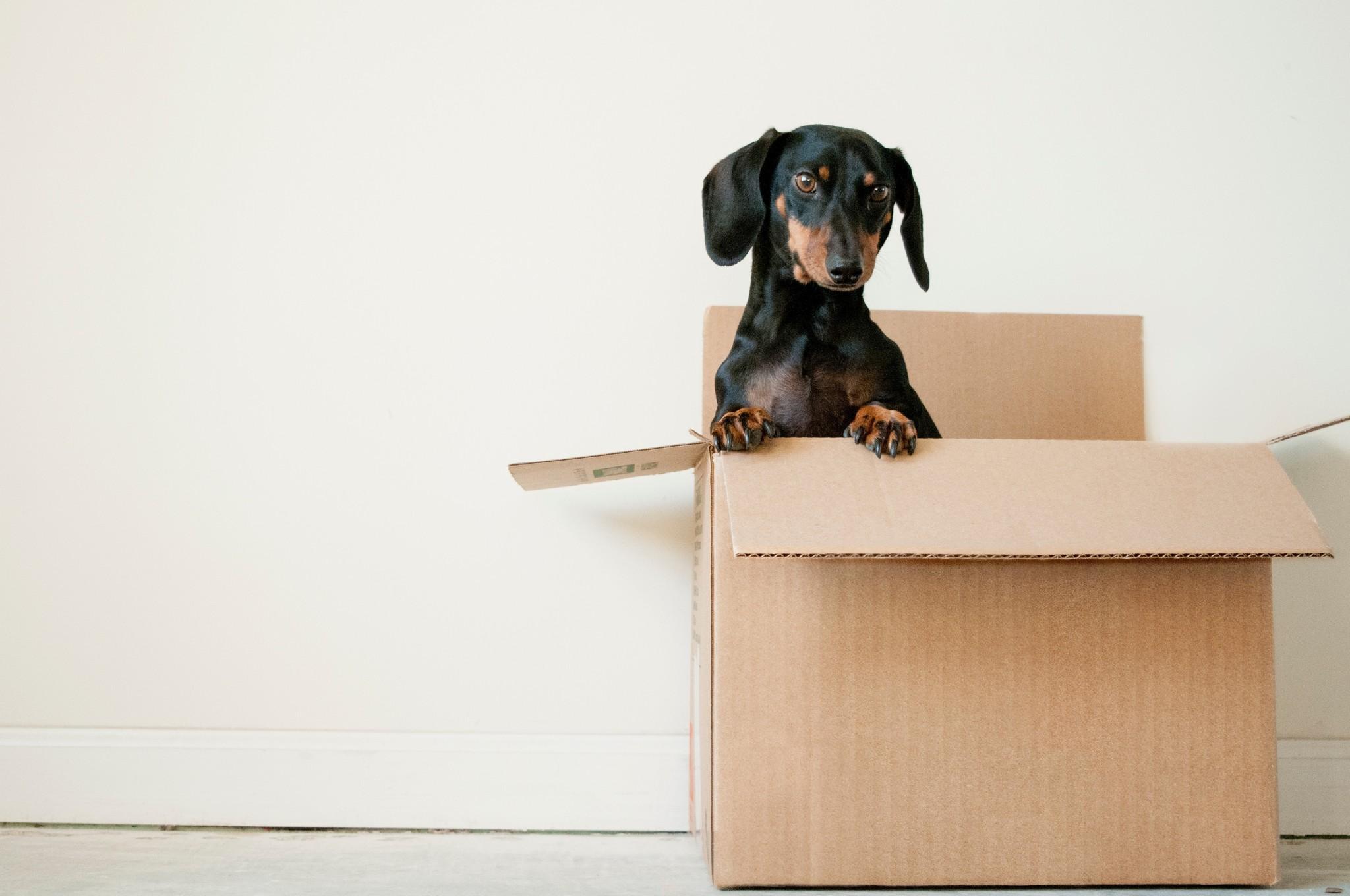 Verhuizen met huisdieren: Waar let je op?
