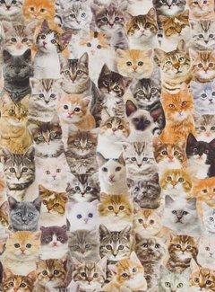 Katten digitale print