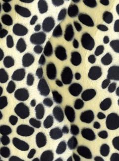 Dalmatiër velboa