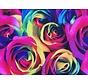 Gekleurde rozen - terlenka
