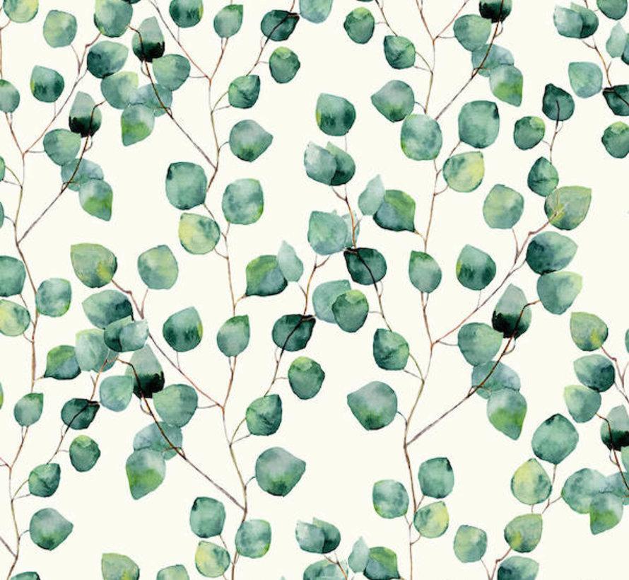 Eucalyptus half panama