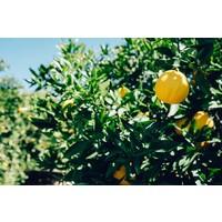 Yellow Submarine biologische gekonfijte citroen (450g)