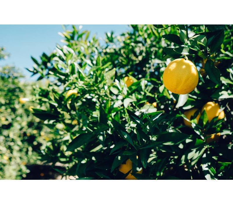Marokkaanse gekonfijte citroen (625g)