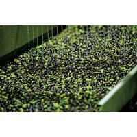 Griechisches Olivenöl Kalamata B.O.P. (50cl)