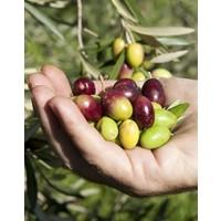 Terracotta kruik olijfolie (25ml) - verde