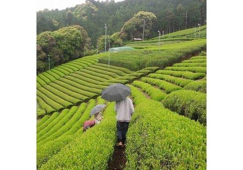Rishouen Tea Co BIO Matcha uit Kyoto (40g)