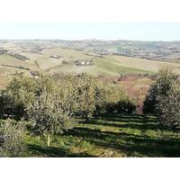 BIO Italiaanse olijfolie MONO  (50cl)