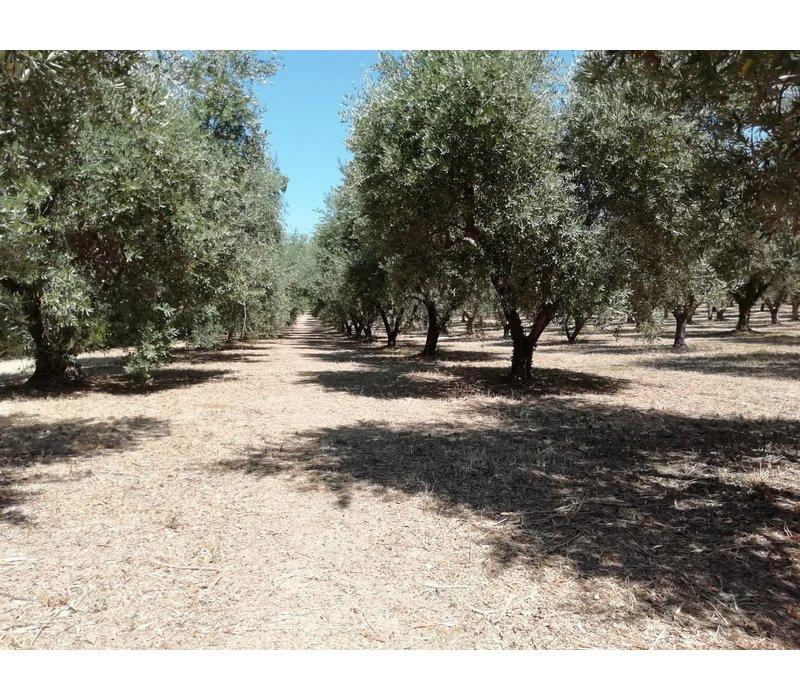 BIO Italienisches Olivenöl BLEND (50cl)