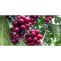 Solar roasted und fair gehandelter gemahlener Kaffee 'Sunny Joe' BIO (500g)