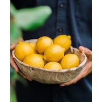 Handgemachter Grapefruit tonic (200ml)