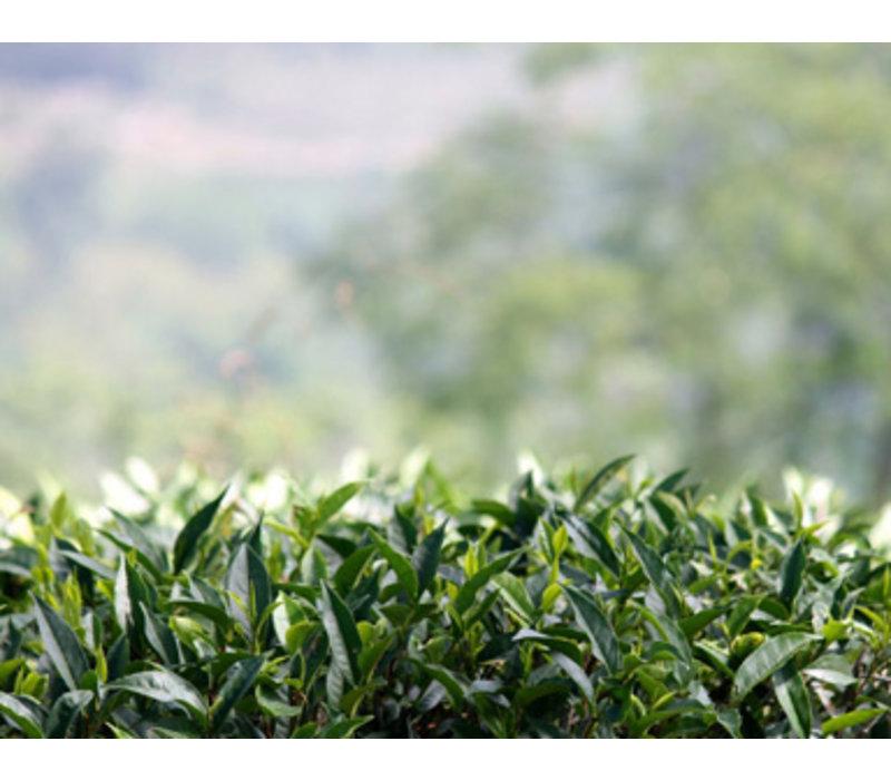 Losse groene thee 'Jasmine' (100g)
