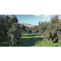Tapenade van groene olijven uit Griekenland (125ml)