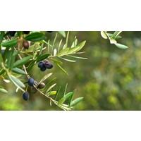 Hand geplukte Griekse Kalamata olijven (315ml)