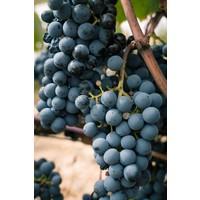 Charaktervoller Spanischer Weißwein (75cl) - El Goru