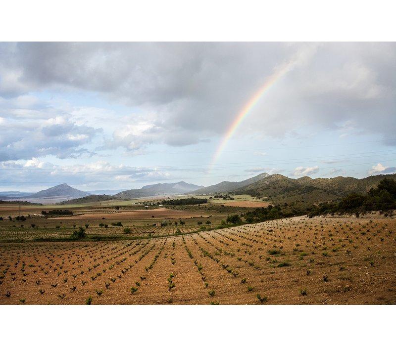 Karaktervolle Spaanse rosé wijn (75cl) - El Goru