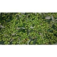 Green Days biologische tapenade van groene olijven (120ml)
