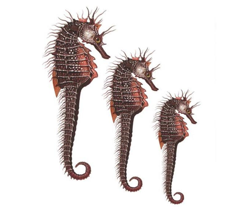 Archivist Gallery - Seahorse - Greeting Card