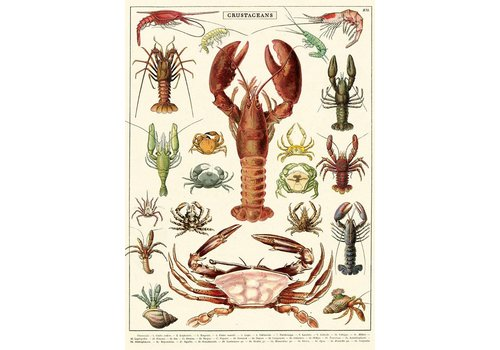 Cavallini Papers & Co Cavallini - Crustaceans - Wrap/Poster